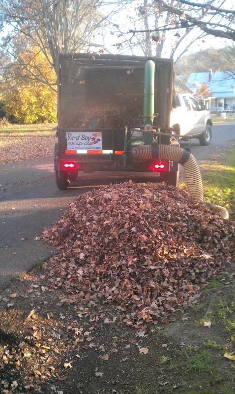 2011 Leaves 13.jpg