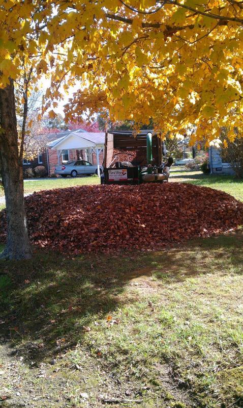 2011 Leaves 5.jpg