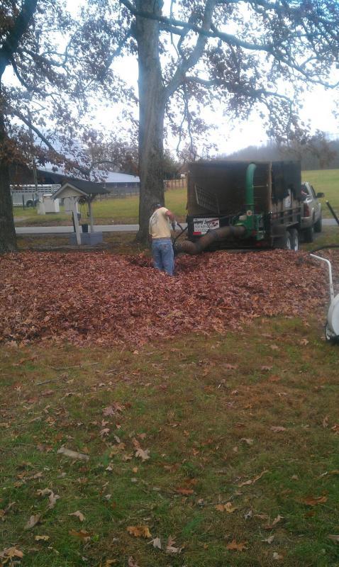 2011 Leaves 7.jpg