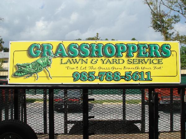 600_Grasshoppers.jpg