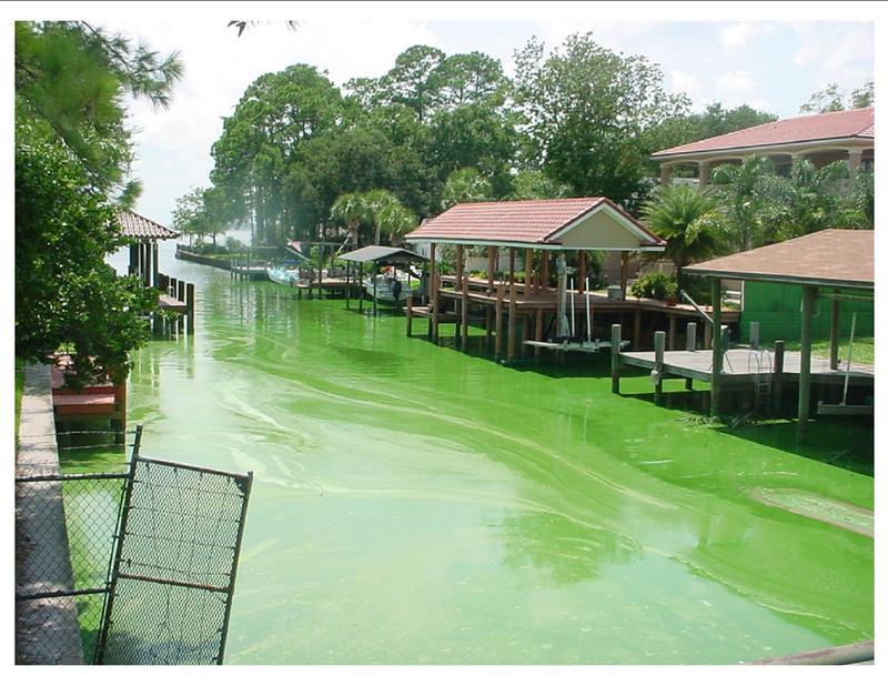 algae fl river 2.jpg