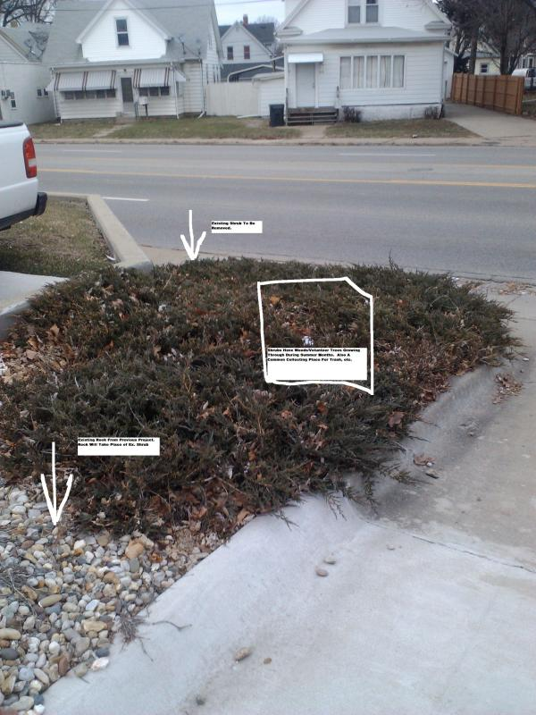 Auto Zone Pekin Shrubs 002.jpg