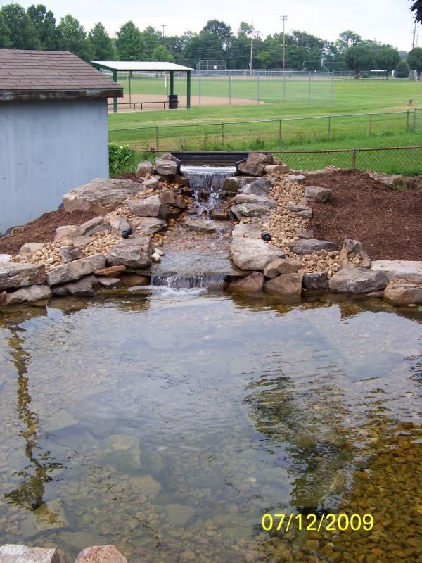 Backyard P1.jpg
