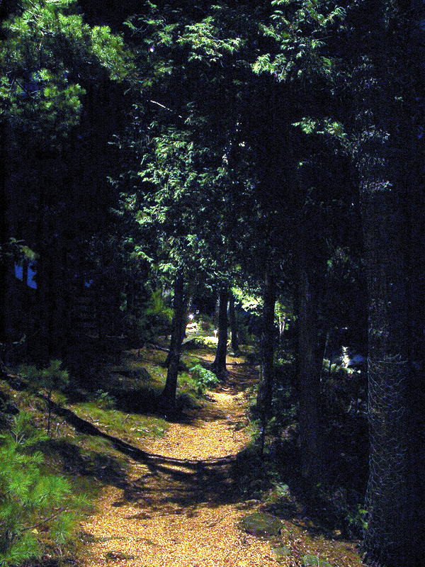 Bar - moonlit path - 01.JPG