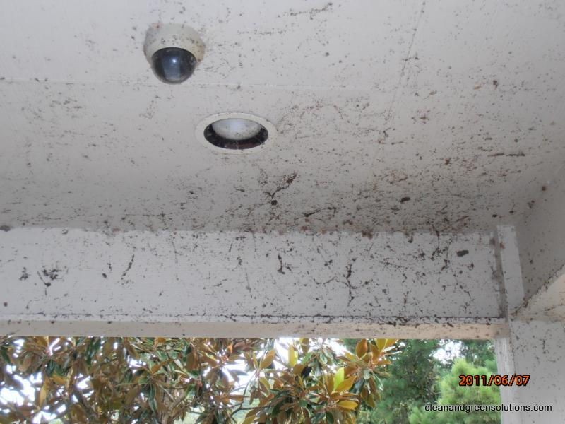 Before Cobe Web Removal Houston.jpg