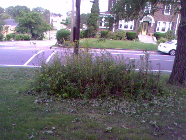 Bergandy apt-front brush pile before.jpg