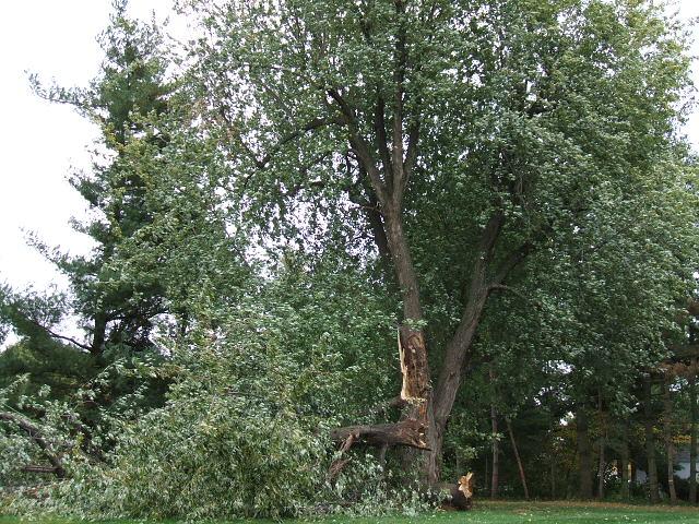 Bill B Tree 001.jpg
