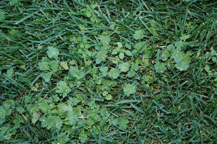 Cluster of Weeds.JPG