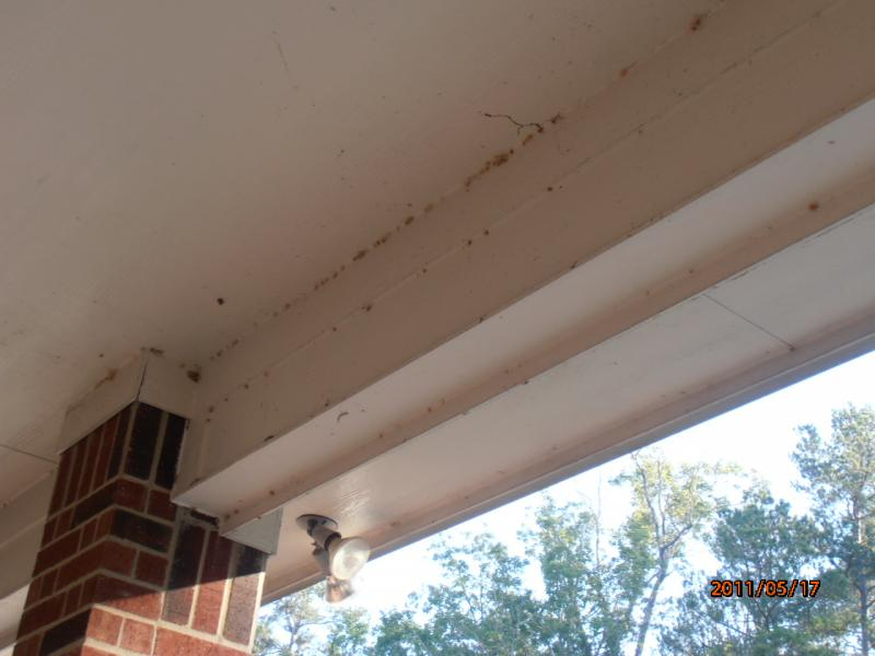 Cob Web Removal Kingwood.jpg