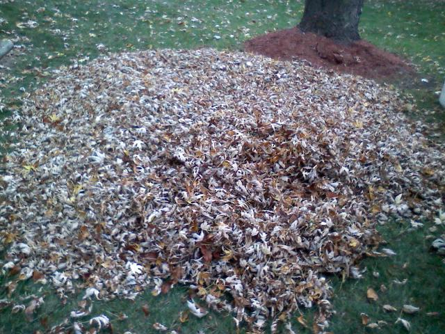 Darlene pile of leaves.jpg