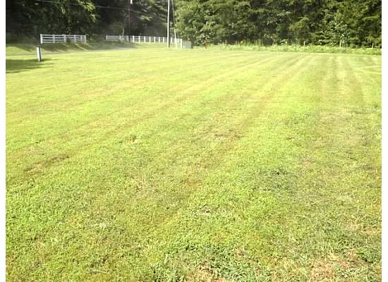Dave's front yard after mowing.jpg