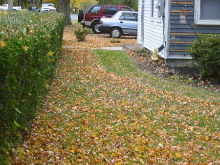 eileen mulch front before.jpg