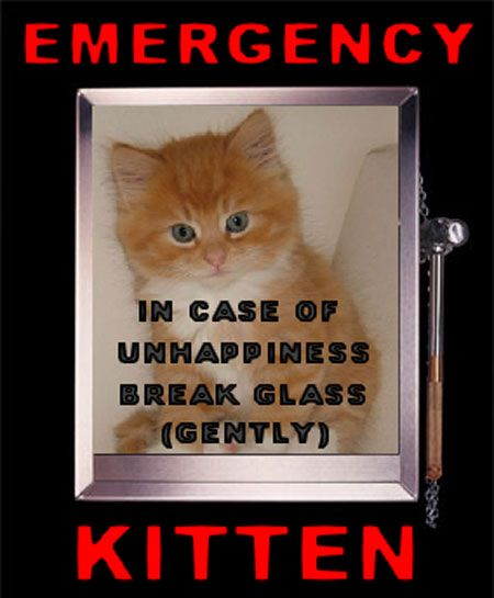 Emergency_Kitten.jpg