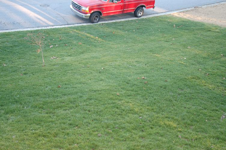 Front Lawn Shot From Doorway2.JPG