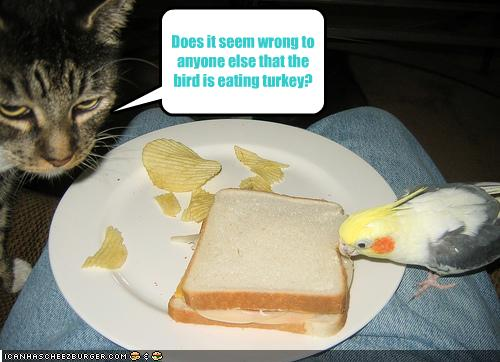 funny-pictures-cat-watches-bird-eat-turkey.jpg