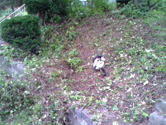 Gen B-cutting down ivy.jpg