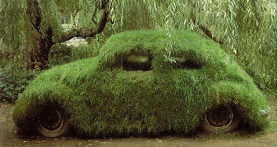 Grass bug.jpg
