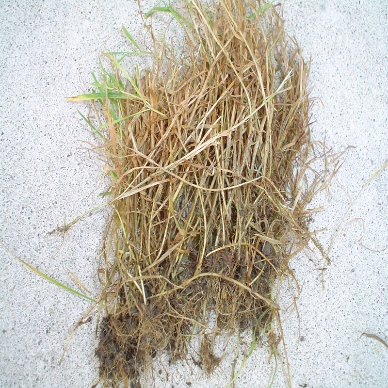 grass-i-pulled-out.jpg