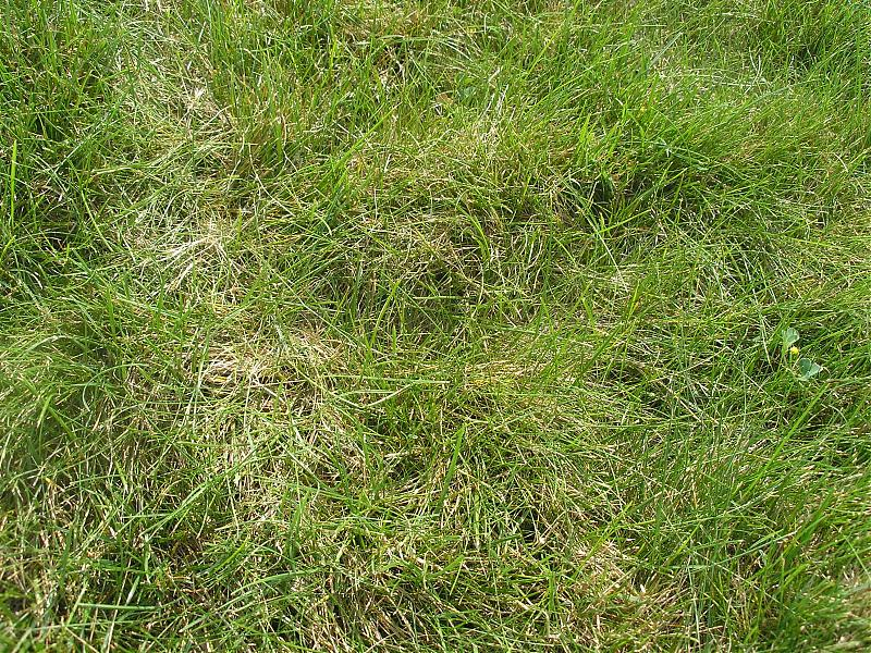 Grass in Back1.jpg