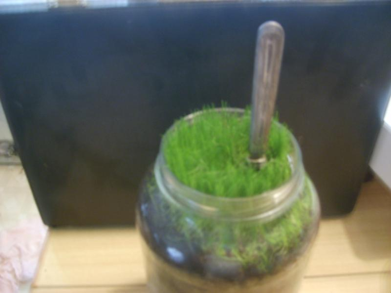 grass in jar 007.jpg