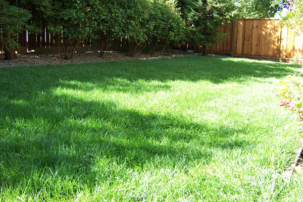 grass is growing.jpg
