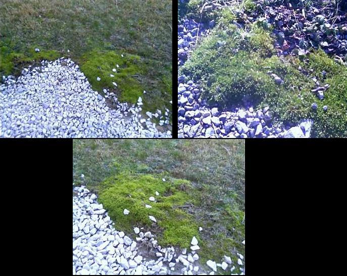 grass mold.JPG