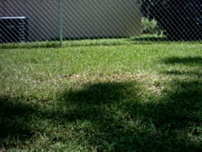 grass picture 4.jpg