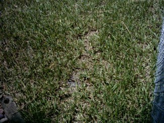 grass picture 7.jpg