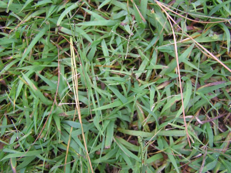grasspic2.jpg