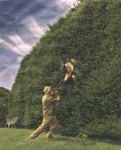 hedge pruning.jpg