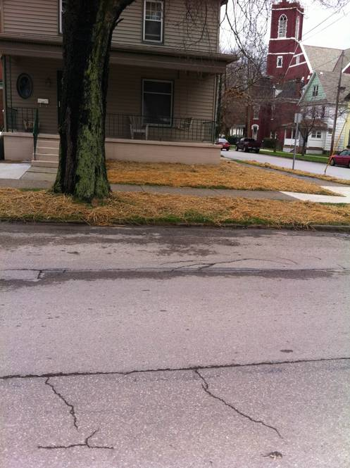 here we too out flower beds and put a lawn in.jpg