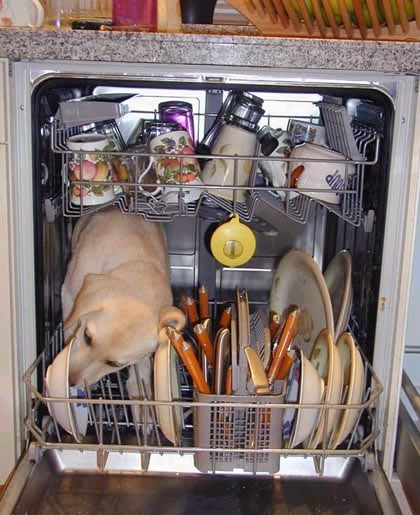 how.does.a.bosch.dishwasher.work.the.secret.is.out.jpg