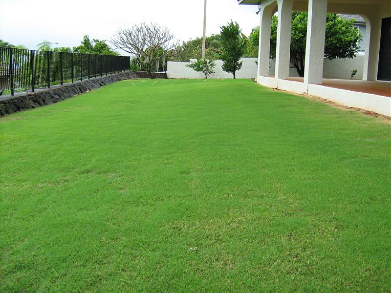The After Photos Of Tifgreen Lawn Lawnsite