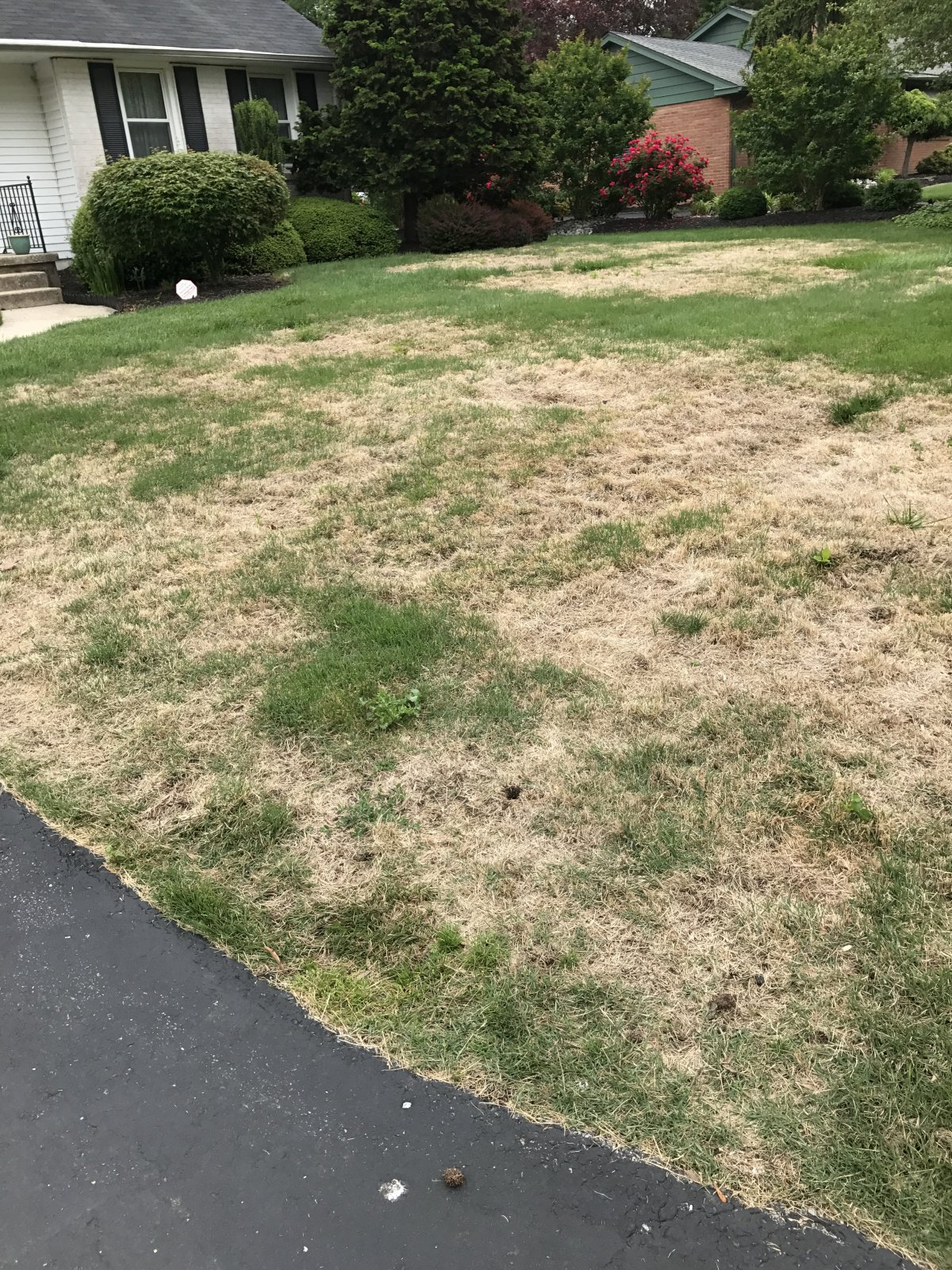 Tarr In Zoysia Lawnsite
