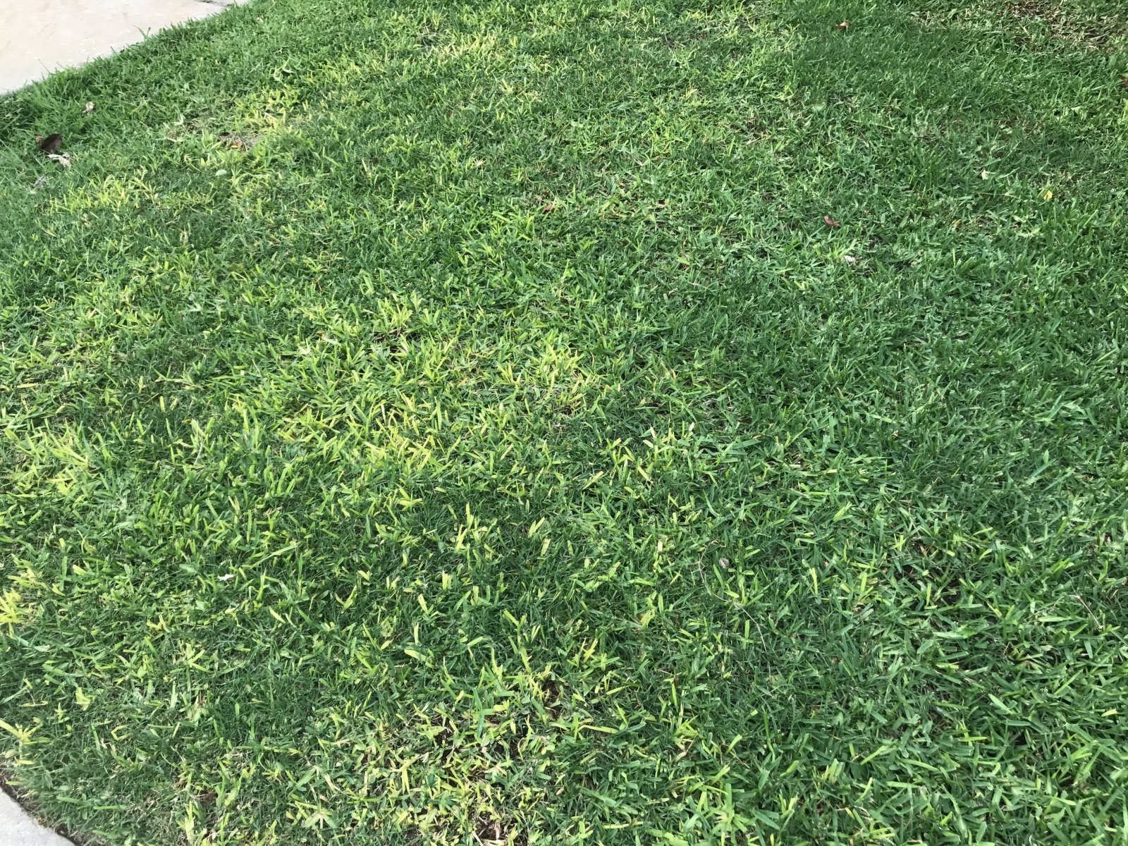 Weed that looks like st augustine grass