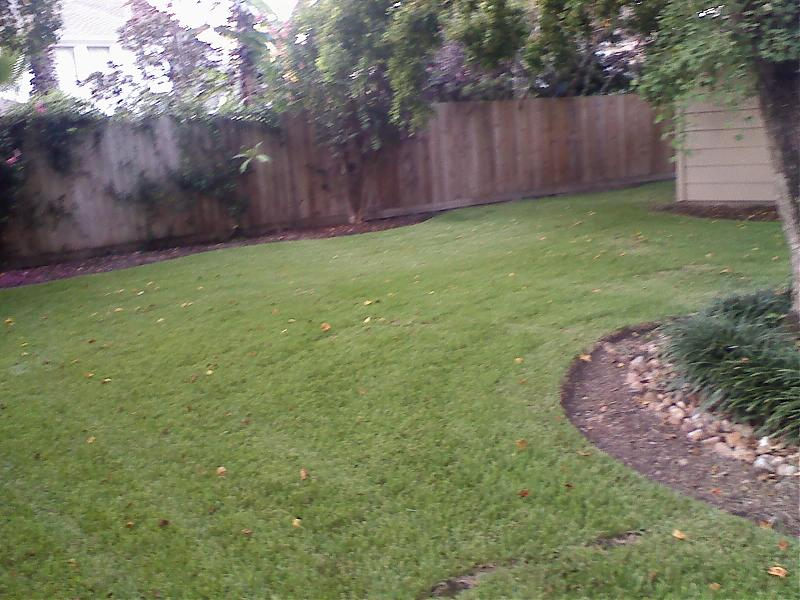 Kershaw back yard 1.jpg