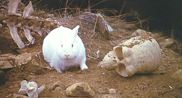 killer%20rabbit.jpg
