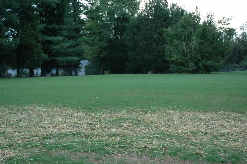lawn 2 weeks 009.jpg
