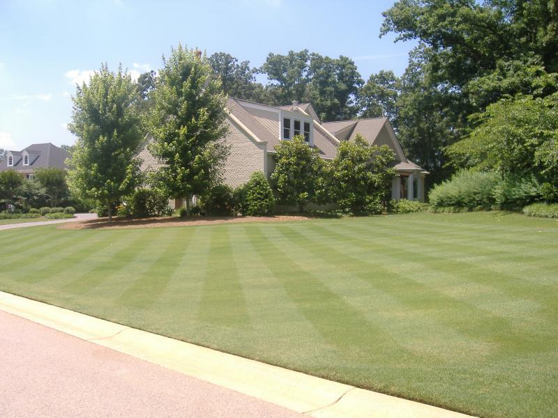 lawn GA Club 001.jpg
