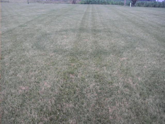 Lawn pic 1.jpg