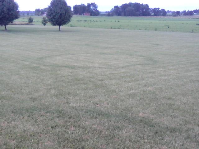 lawn pic 2.jpg