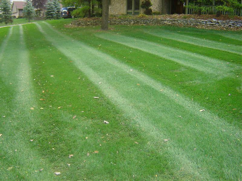 Lawn pic.jpg