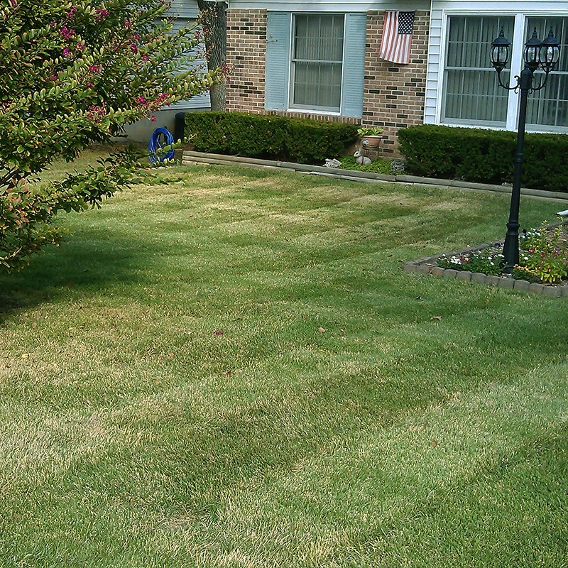 lawn stripes 4.jpg