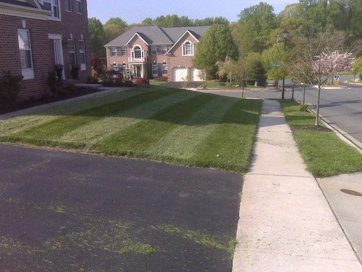 lawn striping.jpg
