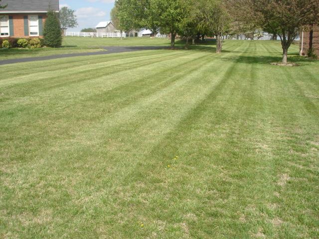 Lawn1.jpg.JPG