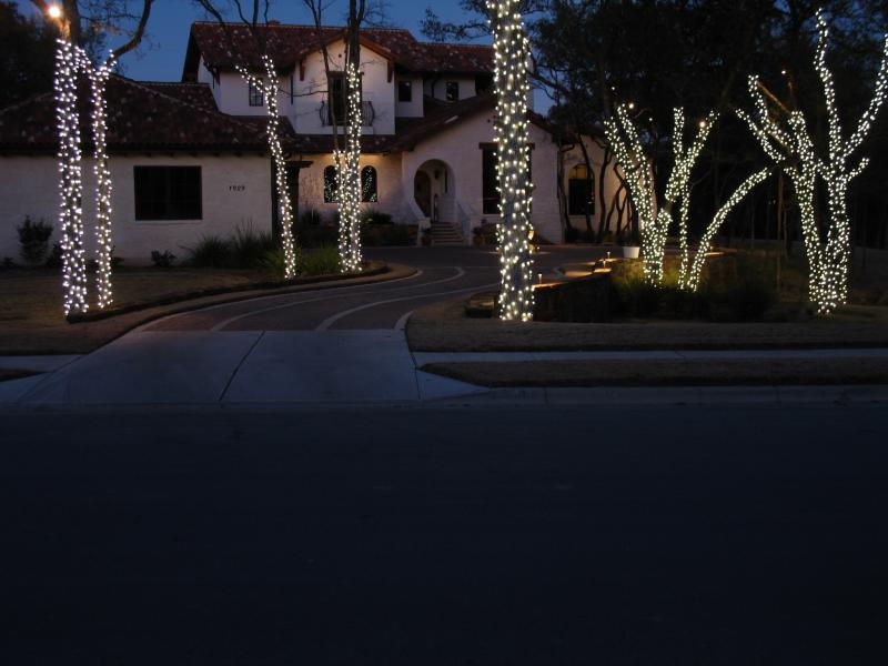 LED Tree Lights.jpg