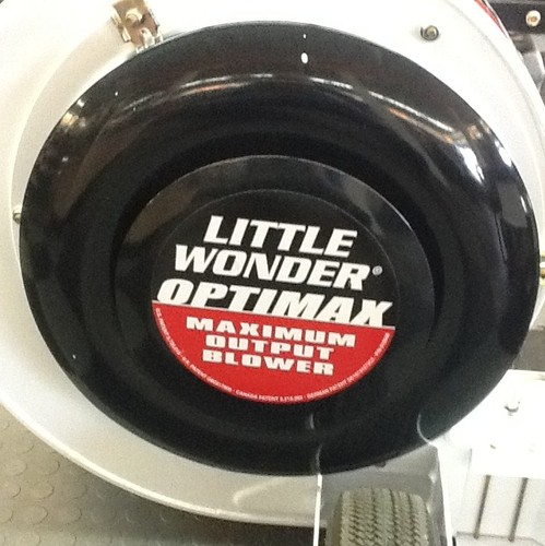 little wonder 3.jpg