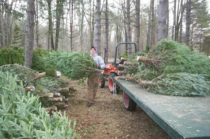 loading trailer.JPG
