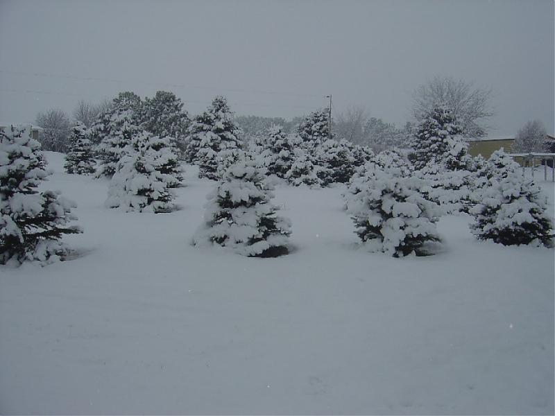 March 17 2008 snow 001.jpg
