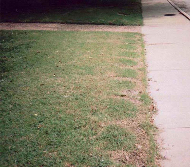 messed up lawn.jpg